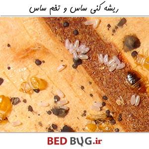 Bug End Bedbugs Egg Extirpation