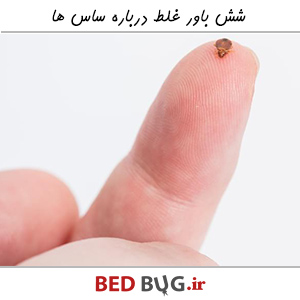 Six False Beliefs About Bedbug's