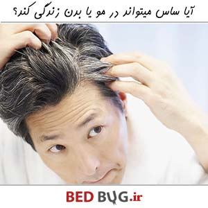 Bedbug In Hair Or Body 3