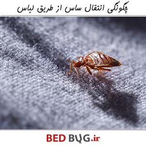 Bedbug Infection Clothing 1
