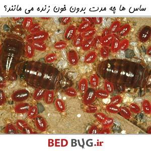 تغذیه ساس ها و تأثیر آن بر نابودی این حشرات