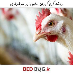 Get Rid Of Bedbug Poultry